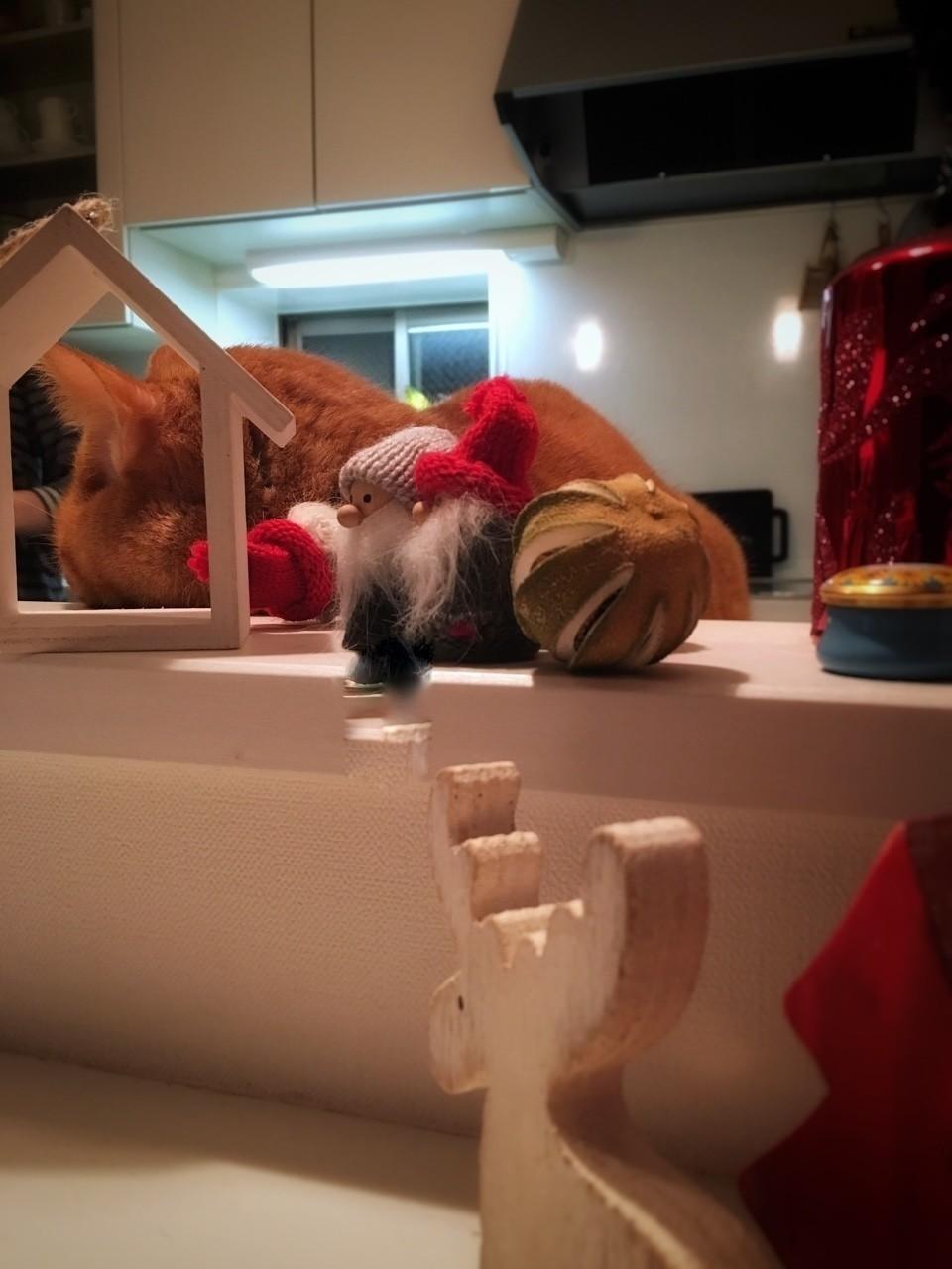 クリスマスが近づいてきて、チビのまわりにはサンタ、トナカイがやってきてます。クリスマス当日は、きっとママからいつもよりちょっと多くケーキをもらえるボクチビです。